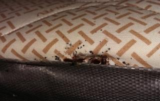 Traitement punaises de lit dans des chambres d'hôtel à Aix en Provence 13090