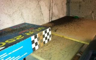sciure sur le sol noire et blanche avec des fourmis