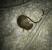 Rat retrouvé mort après avoir ingéré nos produits