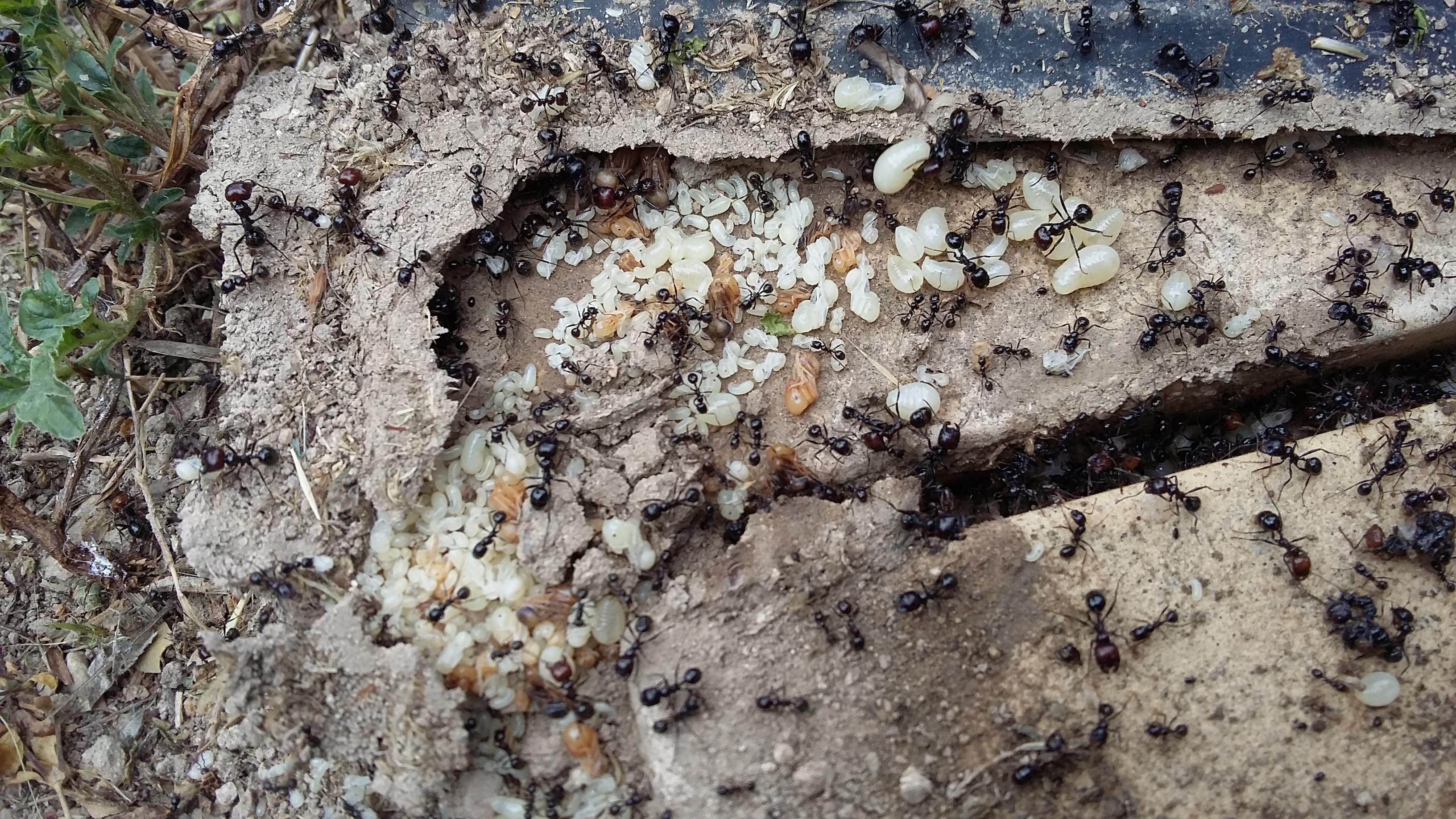 Invasion de fourmis pres d'une terrasse à Lourmarin
