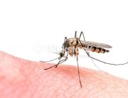 Intervention de désinsectisation des moustiques tigres.