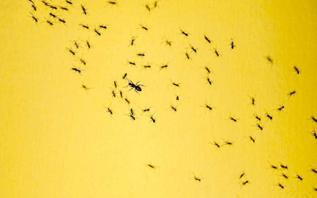 Comment arrêter une invasion de fourmis dans la maison ?