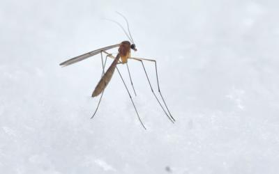 Comment se débarrasser efficacement des larves de moustiques ?